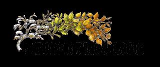 Studenterkilden logo